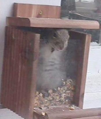 Squir003.jpg